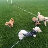 Polly, Coco, Alfie and Bear